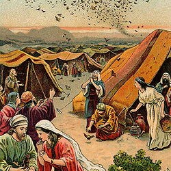 Torah Portion #36 B'ha'alotkha (Numbers 8:1-12:16)