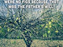 The Fig Tree and Its Lesson